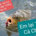 Kính gửi. (Sau đợt thả hơn 130kg cá lóc cho thứ 7)