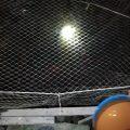 Tối chủ nhật. (22/11). Lúc 21h45. Hồ Voi Con thả hết dèo cá chép Lô nhé. (Ra hồ