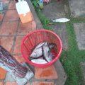 Buổi chiều cá brne em lại ăn mạnh