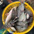 Tình hình mưa, bão cá, cần thủ đầu tiên lên cần đã chốt 21kg phi/suất Tan Phuoc