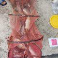 cám ơn các cần thủ đã ủng hộ, chủ hồ bắt đầu đò grab anh Nguyen Viet Thai 17.5kg