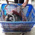 11h thả 53kg cá lóc lần 2.  Báo cáo 7h30 đã thả 64kg cá lóc  Tổng thả thứ 3 ngà