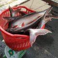 Hôm nay ngày 22/02/2021 hồ thả thêm cá tra seize trung bình 3-4-5kg phục vụ đại