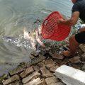 Hồ câu Lê Thị Riêng kính mời các cần thủ đam mê câu cá mè ngày mai 14/3/2021 chú
