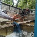 Hồ câu Lê Thị Riêng bồi thêm cá mới cho kỳ thi tiếp theo chủ nhật 04/4/2021. Cá