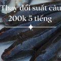 Hồ cá lóc cố định suất câu 200k 5 tiếng