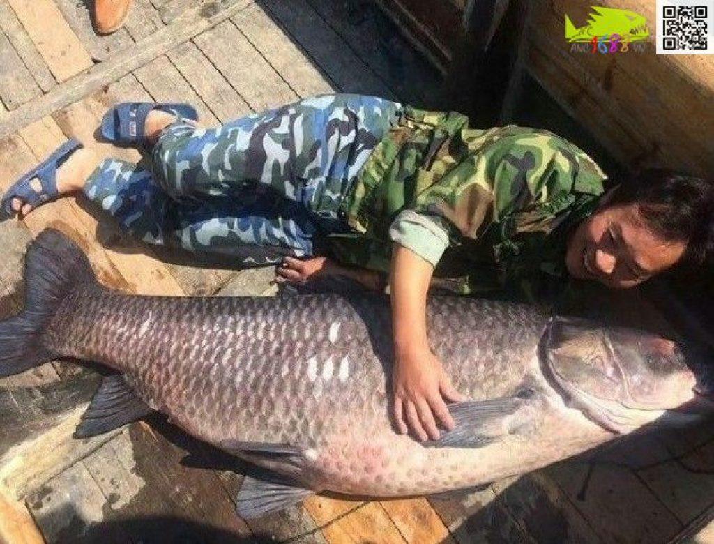 Cá thể trắm đen được cho là lớn nhất từ trước tới nay có trọng lượng lên tới 89kg